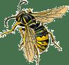 St Abigail bee