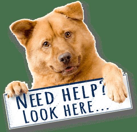 Prayer Requests - St  Roch, patron saint of dogs